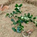 image jungtierschau1017-1-jpg